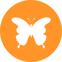 Die Schmetterlinge